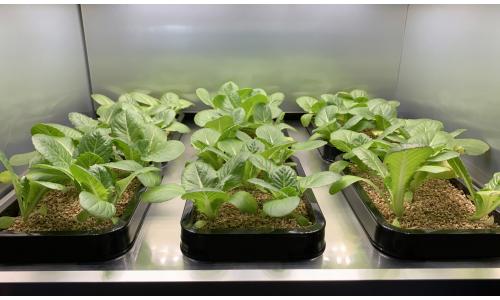 LG: παρουσιάζει στη CES τον πρώτο καλλιεργητή λαχανικών εσωτερικού χώρου
